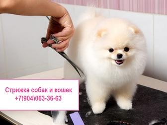 Новое изображение  Стрижка собак и кошек (Арзамас) 43388696 в Арзамасе