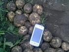 Просмотреть фотографию Разное Картофель оптом от производителя 36658273 в Барнауле