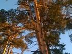 Свежее фото Загородные дома Продаю коттедж на Горе 37792819 в Барнауле