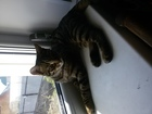 Фото в Кошки и котята Продажа кошек и котят Отдам двух кошечек в добрые руки. 4 мес, в Барнауле 1