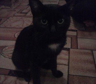 Фотография в Кошки и котята Продажа кошек и котят Нашла хорошего кота, т. к. живу в общежитии в Барнауле 0
