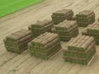 Новое фото Ландшафтный дизайн Рулонный газон доставка, укладка, гарантия 68602579 в Белгороде
