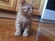Котенок: Шикарный Рыжий Котик Отдадим заботливым людям рыжего мальчика. Родился