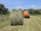 Изображение в Прочее,  разное Разное Сено свежее луговое, разнотравье, тюки по в Березовском 250