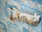 Фотография в Отдам даром - Приму в дар Отдам даром Отдам в очень добрые руки котят от домашней в Брянске 0