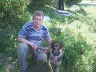 Фото в Собаки и щенки Вязка собак Восточно-европейская овчарка  Очень красивый в Брянске 0