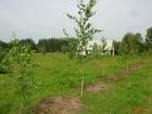 Скачать изображение Земельные участки Продаю земельный участок 20га в 250 км от Москвы 38808926 в Брянске