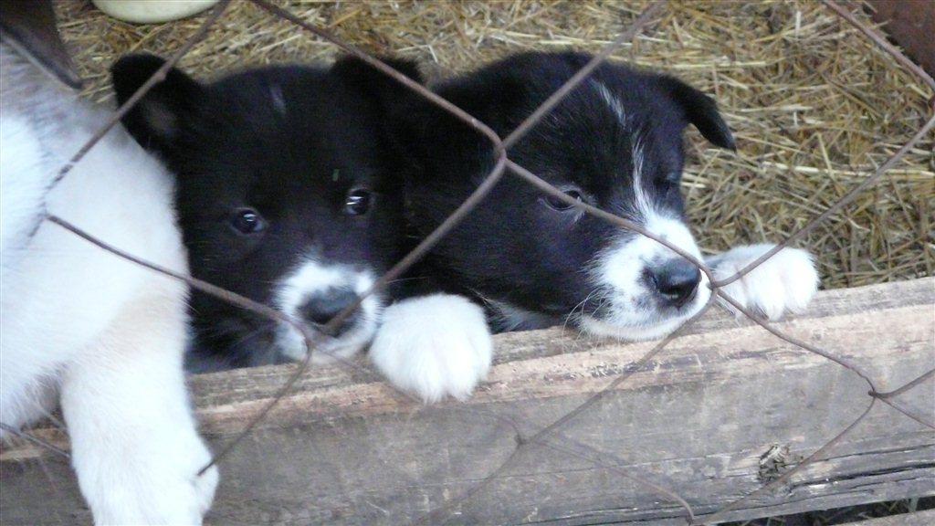 Фотки щенят