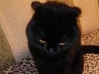Смотреть foto  Котик ищет кошечку для вязки 53951541 в Челябинске