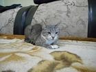 Просмотреть фотографию Вязка кошек Вязка кошки в первый раз , просит котят ! 67665429 в Челябинске