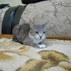 Вязка кошки в первый раз, просит котят