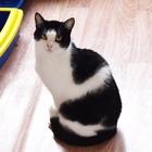Котик Каспер- игривый и боевой