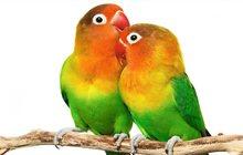 продаю попугайчиков