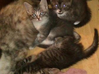 Увидеть фотографию Отдам даром Отдам котят в добрые руки 33005596 в Дмитрове