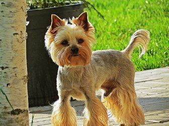 Просмотреть foto Услуги для животных стрижка собак в Долгопрудном 33639555 в Долгопрудном