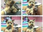 Скачать бесплатно изображение  Зоосалон-Зоомагазин Dog Подиум 34547716 в Домодедово