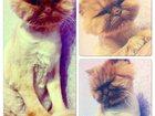 Фотография в Кошки и котята Вязка Зеленоглазая кошечка Мария ищёт котика для в Екатеринбурге 0
