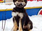 Смотреть foto  Симпатичные, дружелюбные щенки , ждут вас 32592716 в Екатеринбурге