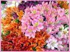 Фотография в Домашние животные Растения С частного приусадебного хозяйства продается в Арамиле 0