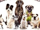 Скачать бесплатно foto Продажа собак, щенков Гостиница для животных, 32670205 в Екатеринбурге