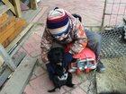 Фотография в Отдам даром - Приму в дар Отдам даром Отдам в хорошие руки щенка (мальчик). Родился в Екатеринбурге 0