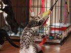 Изображение в   Замечательный котенок 1. 5 месяца. Вместе в Екатеринбурге 25