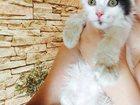 Скачать фотографию Отдам даром Отдам замечательного котенка 33005156 в Екатеринбурге