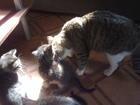 Фото в Отдам даром - Приму в дар Отдам даром Отдам в хорошие руки котят в возрасте 2 месяца в Екатеринбурге 0