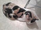 Увидеть foto Находки Нашлась кошка 37034367 в Екатеринбурге