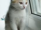 Скачать бесплатно foto Отдам даром Отдам в хорошие руки котёнка, 2 мес, 37250114 в Екатеринбурге