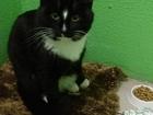 Фотография в Потерянные и Найденные Найденные 3 декабря на Уктусе найден кот. Черно-белый, в Екатеринбурге 0
