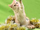 Фото в Отдам даром - Приму в дар Отдам даром Яшма когда-то была домашней кошкой. То ли в Екатеринбурге 0