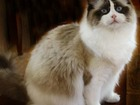 Изображение в Кошки и котята Продажа кошек и котят Отдаю котят. Родилось целых пять, кошка рожает в Екатеринбурге 0