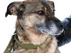 Свежее foto  Собака Джина, дворняга-звоночек 4,5г, 38756803 в Екатеринбурге