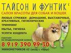 Просмотреть фото  Стрижка собак и кошек 39334278 в Екатеринбурге