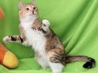 Увидеть изображение Отдам даром - приму в дар Кошка Мышка, милая камышка, 1г, 39649619 в Екатеринбурге