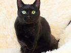 Просмотреть изображение  Кошка Ежевика 2г, , разумная черная котоЛичность 56664926 в Екатеринбурге