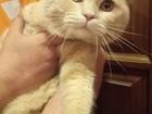 Просмотреть фотографию Кондиционеры и обогреватели Вязка с шотландским очень красивый котик 60977587 в Екатеринбурге