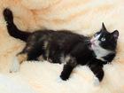 Скачать фотографию Отдам даром - приму в дар Черепаховая кошка ~1г, срочно ищет дом 67654458 в Екатеринбурге