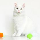 Кошка Скалли, Прекрасная Царевна-Несмеяна, 5 лет