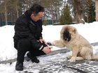 Увидеть фотографию Услуги для животных Дрессировка собак в г, Набережные Челны 33297114 в Набережных Челнах