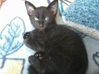 Смотреть foto  Отдам котят 33299363 в Гатчине