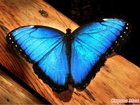 Просмотреть фото Организация праздников Живые тропические бабочки в подарок 33888651 в Грозном
