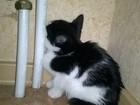 Просмотреть фотографию Отдам даром - приму в дар Отдам замурчательного котенка 38528768 в Хабаровске
