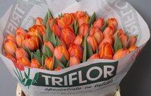 Тюльпаны оптом Хабаровск прямая поставка из Голландии