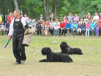 Уникальное фото Услуги для животных Дрессировка собак, 33421601 в Хабаровске
