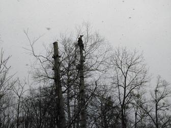 Уникальное foto Другие строительные услуги Спил, валка и кронирование деревьев 67712711 в Хабаровске