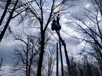 Скачать бесплатно фото Другие строительные услуги Спил, валка и кронирование деревьев 67712711 в Хабаровске