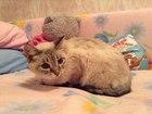 Смотреть фотографию  ищем хозяина кошечке 37589296 в Ханты-Мансийске