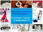 Изображение в Собаки и щенки Продажа собак, щенков В продаже яркие щеночки хаски чёрно-белого, в Иваново 0